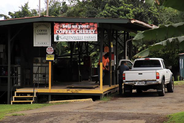 コナ 一番古い コーヒー農園 5