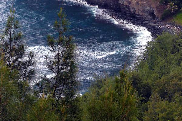 ハワイ島ポロル渓谷トレイル 8