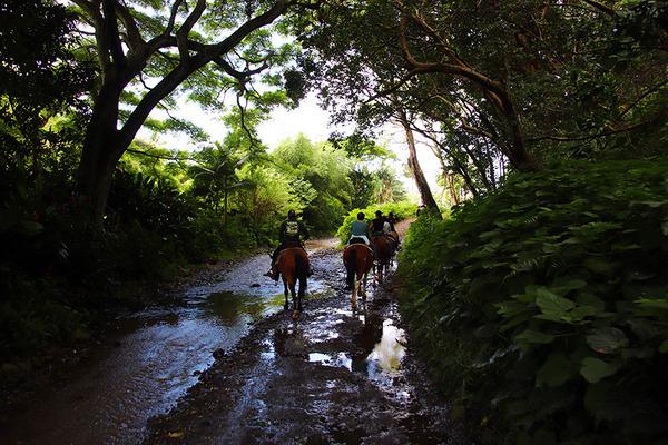 乗馬はやっぱりハワイ島がいい 2