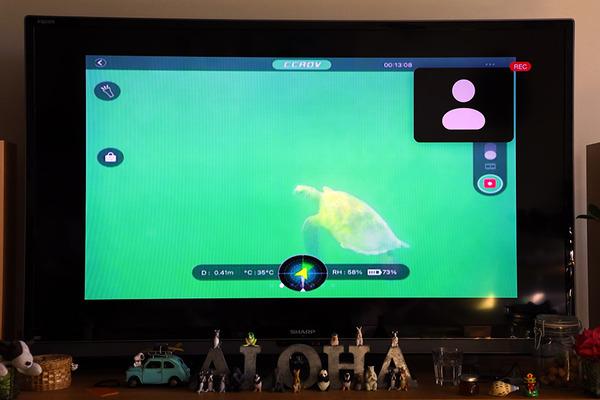 天国の海サンドバー ツアーでウミガメと遭遇 11