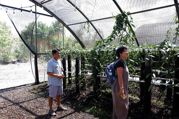 ハワイ産バニラ農園コナ空港近く 4