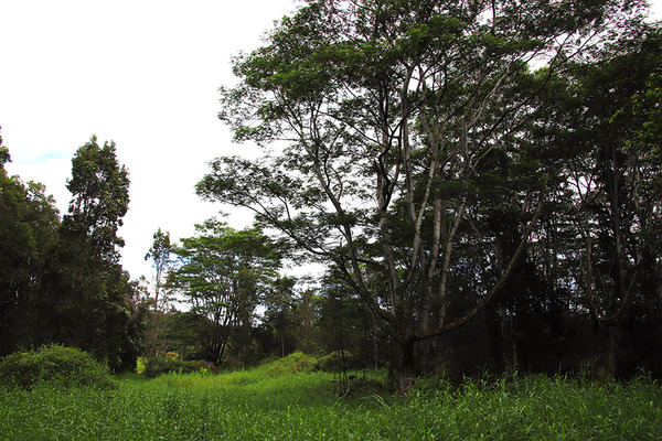 puna forest 1