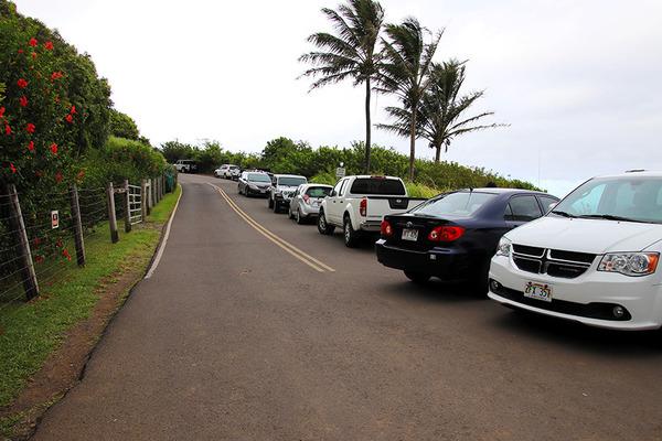 ハワイ島ポロル渓谷トレイル 2
