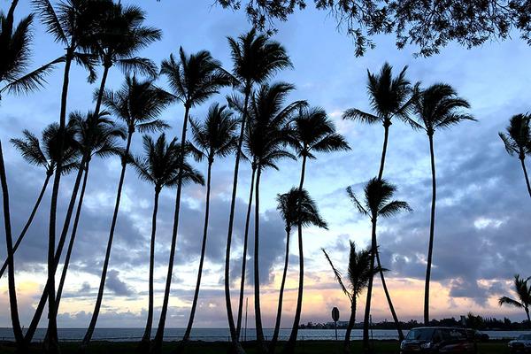 ハワイ州公認のPCR事前検査機関が追加されました