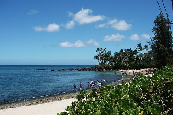 ラニアケアビーチのウミガメ違反者が増加 3