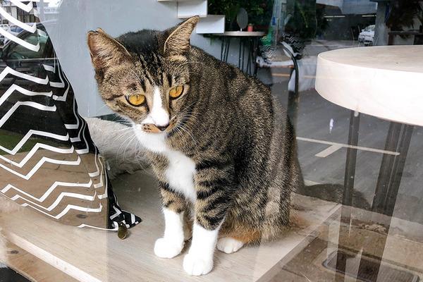 カイムキのおしゃれペットショップと猫カフェ 9