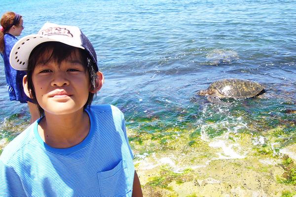ラニアケアビーチのウミガメ違反者が増加 2