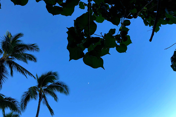 ニューオータニカイマナビーチホテルハウツリーラナイ  8