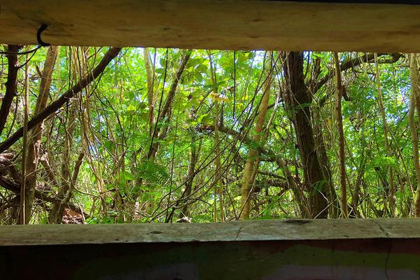 ハワイカネオヘ ピルボックストレイル 9