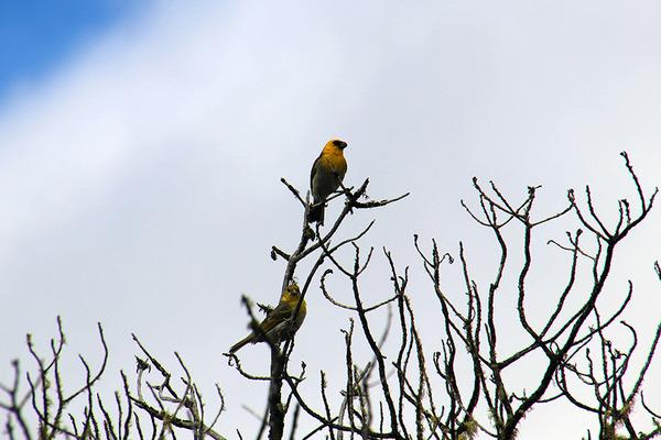 ハワイの固有種 マーマネとパリラ 9