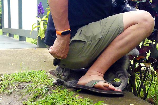 ハワイ島 コーヒー農園のかわいいネコ 5