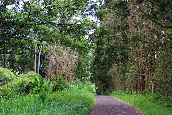 puna forest 3