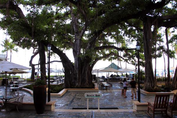 モアナサーフライダーホテル バニヤンツリー 5