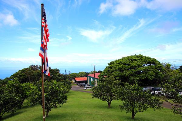 ハワイ島 コーヒー農園のかわいいネコ 1