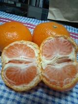 2007/12/9 和歌山から届いたみかん 2