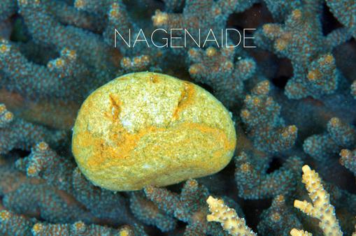 nagenaide