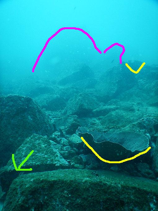DSCN0457