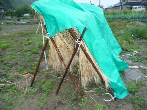 畑の画像5月から6月ブログ用 002