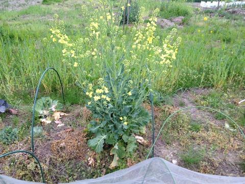 2012  4月畑 元庭と畑 016
