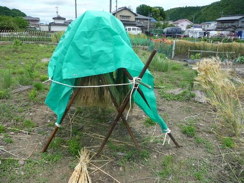 畑の画像5月から6月ブログ用 012