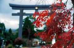 霧島神宮の鳥居の紅葉