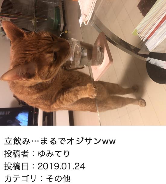 スクリーンショット 2019-01-25 14.53.50