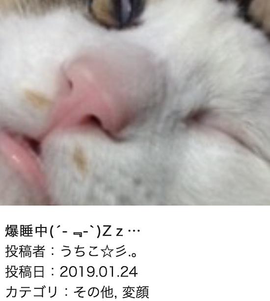 スクリーンショット 2019-01-25 14.35.51