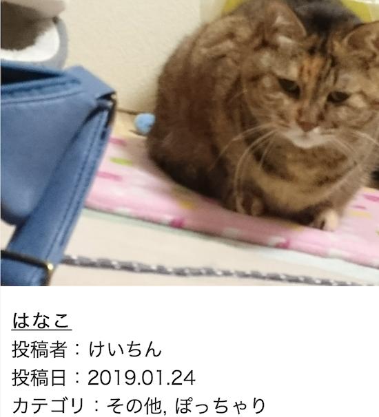 スクリーンショット 2019-01-25 14.37.28