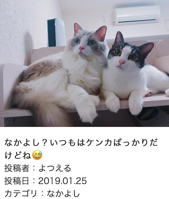 スクリーンショット 2019-01-25 14.38.02