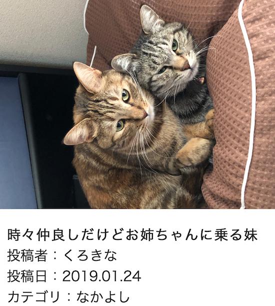 スクリーンショット 2019-01-25 14.39.43