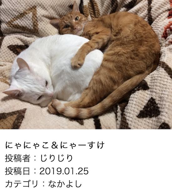 スクリーンショット 2019-01-25 14.37.45