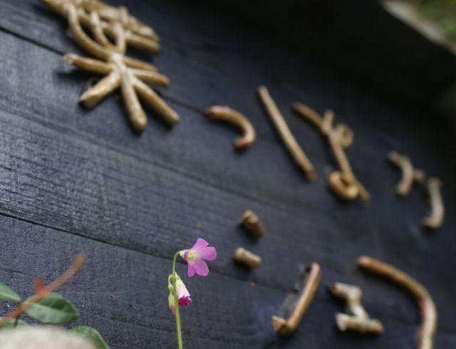 看板とカタバミの花