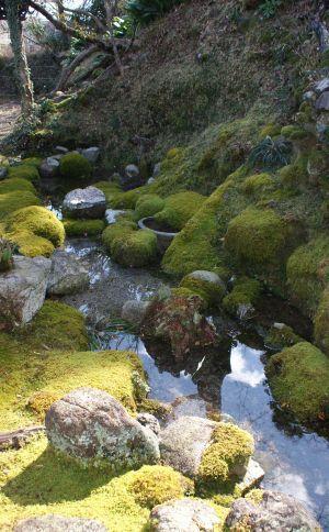 垂直庭園池