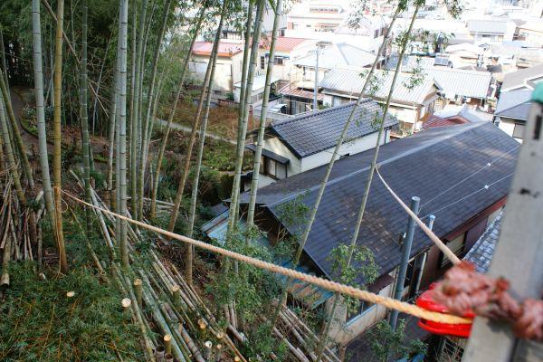 20130123竹林皆伐