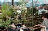 小品盆栽屋