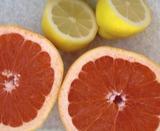 グレープフルーツ&レモン (2)