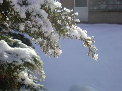 凍える木々