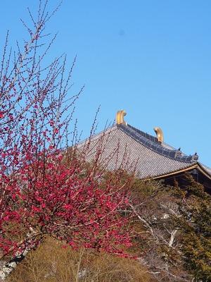 紅梅&大仏殿
