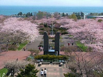 北海道水産仕入 通販 : 噴火湾 ホタテ