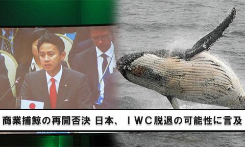 IWC捕鯨