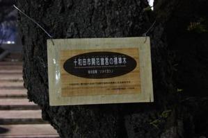 十和田の標準木