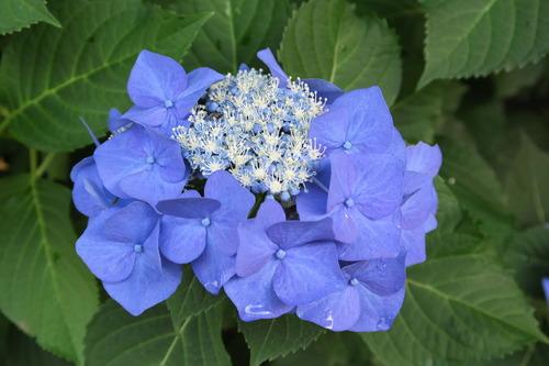 野辺の花0019