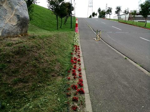 北の杜御廟道路の花_20210828