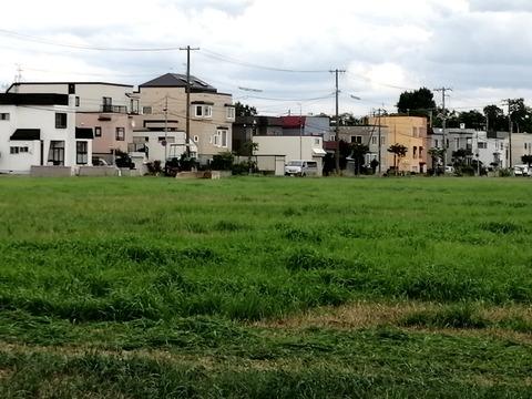 近藤牧場牧草地2_20210829