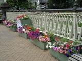 橋の上の花2