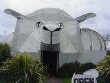 ティラウ 羊