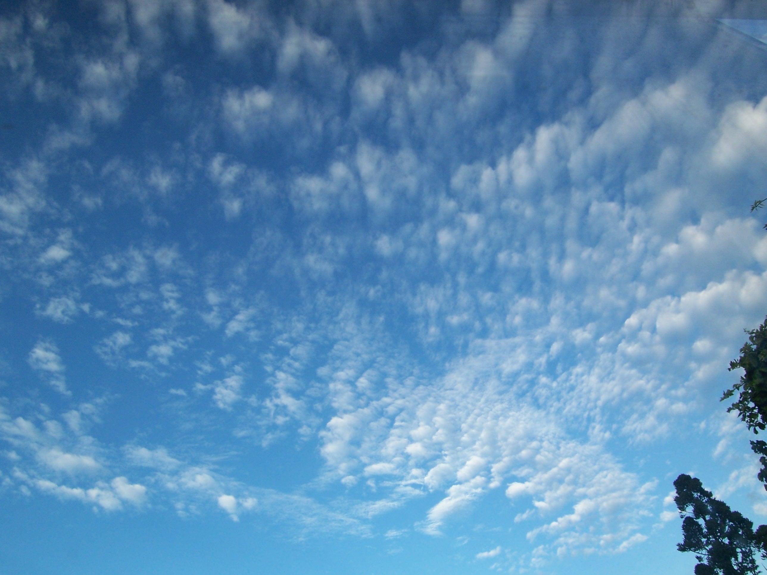 ニュージーランドの青空