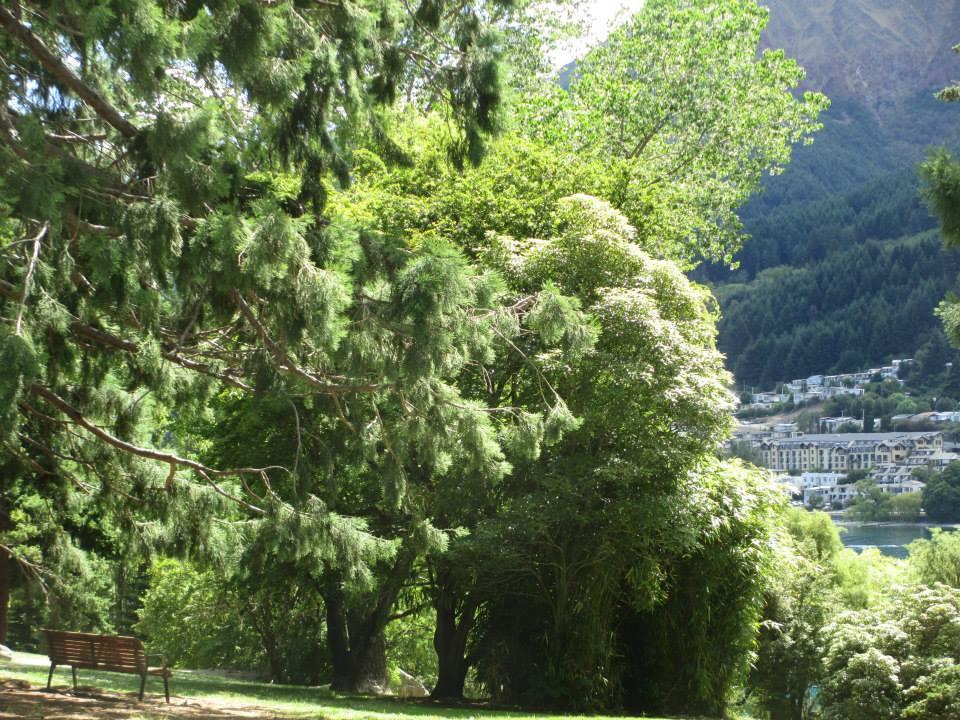 huge_trees