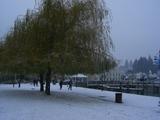 zqn snow