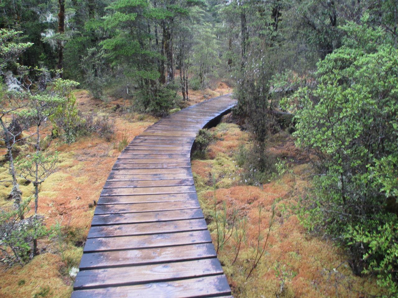 wetland9